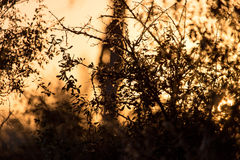 Branches of a tree at sunset Stock Photography