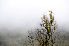 The branches of a tree surrounded by fog Royalty Free Stock Image