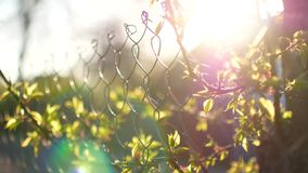 Branches of a tree swaying in the wind at sunset behind a fence.  stock footage