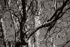 Branches Stock Image