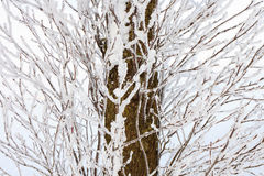Branches and tree trunk in winter Stock Image