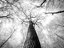 Branches, Tree, Twigs, Bark, High Royalty Free Stock Photos