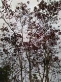branches treen fotografering för bildbyråer