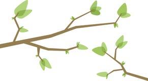 branches treen Arkivbild