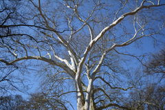 branches treen arkivbilder