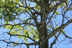 branches treen Royaltyfria Bilder