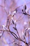 branches treepilen Royaltyfria Foton