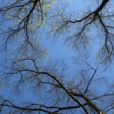 Branches of trees Royalty Free Stock Image