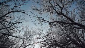Branches of trees against the background of the winter sky. Branches of trees covered with snow. Winter forest. Sunlight in winter forest. Sun shine through tree stock footage