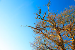 Branches of trees against the blue sky. Autumn scenery Royalty Free Stock Photo