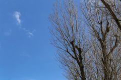 Branches of trees against a blue sky. Branching trees against the blue sky stock photography