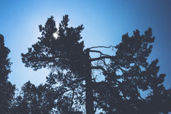 Branches of trees against sky Royalty Free Stock Image