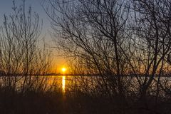 Through the branches of the trees along lake Zoetermeerse plas you can see how the rising sun colors the sky beautifully royalty free stock photo
