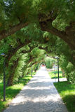 Branches of trees as an arch. Sidewalk and branches of trees as an arch Stock Photo