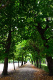 Branches of trees as an arch. Sidewalk and branches of trees as an arch Stock Photography