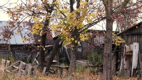 Branches of trees in autumn on a background of. Autumn in Russia. Branches of trees in autumn on a background of destroyed wooden buildings stock video
