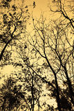 Branches of trees autumn silhouette backlight orange sky Royalty Free Stock Photography