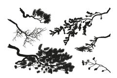 The branches of trees. Black silhouette on a white background. D. Rawing of pine, fir and cherry. Vector illustration Royalty Free Stock Images