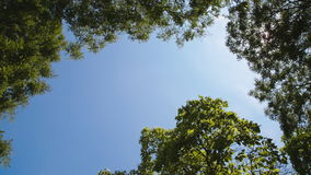 Branches of trees on blue sky background. The branches of the trees against the blue sky in a clear summer day. Bottom view stock video footage