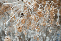 Branches of trees covered with frost Stock Photo