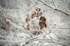 Branches of trees covered with frost Stock Photography