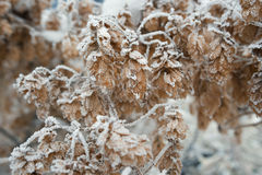 Branches of trees covered with frost Stock Photos