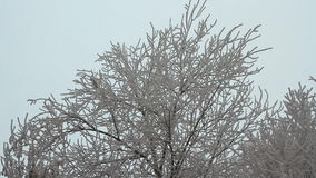 Branches of trees covered with hoarfrost. On a cloudy day stock video footage
