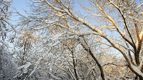 Branches of trees covered with snow Royalty Free Stock Photos