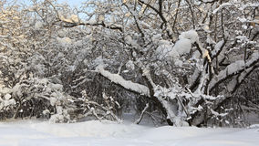 Branches of trees covered with snow. Royalty Free Stock Photography