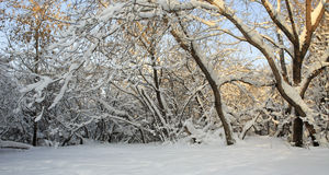 Branches of trees covered with snow. Stock Photos
