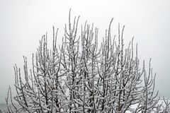 Branches of trees covered by snow stock photography