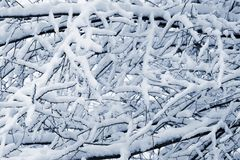 Branches of trees covered with snow in winter Stock Photography