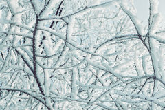 Branches of trees covered with snow. Royalty Free Stock Photo