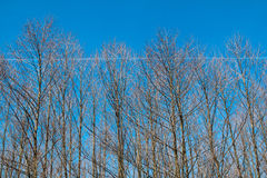 Branches of trees Royalty Free Stock Images