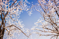Branches of trees form a heart shape Royalty Free Stock Photography