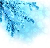 The branches of trees in frost blue on a winter background Royalty Free Stock Photo