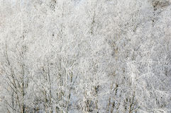 Branches of trees in hoarfrost Royalty Free Stock Images