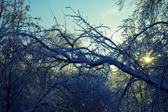 Branches of the trees in the ice Stock Photo