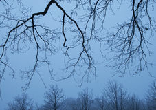 Branches and Trees. Leafless branches in the foreground and trees in the background Stock Photo