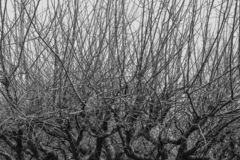 Branches of trees without leaves royalty free stock images