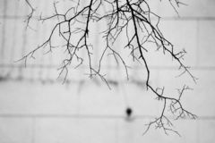 Branches of trees without leaves in black and white stock photo
