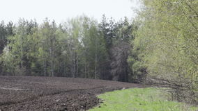 Branches of trees with leaves hatched. Swaying in the wind in the spring against the background of the plowed field and trees stock footage