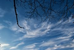 Branches of trees without leaves look into the autumn sky royalty free stock photo