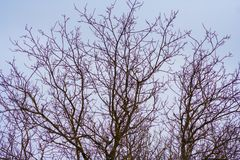 Branches of trees without leaves and sky stock image