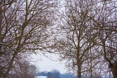 Branches of trees without leaves and sky royalty free stock photography