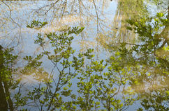 Branches of the trees reflected in a puddle Stock Photos