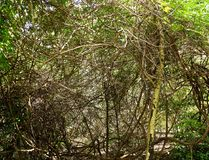 Puzzle of branch in rain forest in Singapore royalty free stock photo