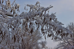 Branches of trees and shrubs abundantly covered with snow Stock Photography