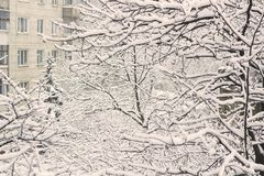 Branches of trees in snow and falling snow. Near residential block of flats retro colored Royalty Free Stock Photos