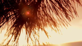 Branches of trees at sunset. In the coniferous forest stock video